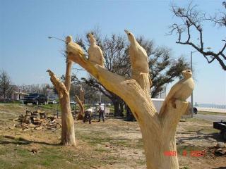 Oak_trees_4